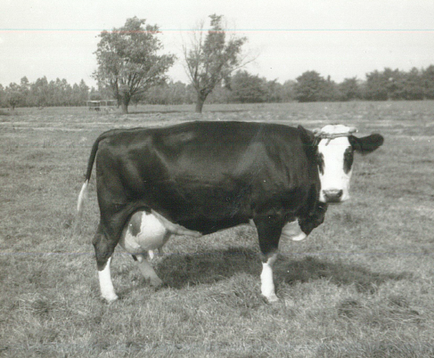 Gerda the First Cow