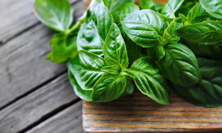 {Beautiful Basilico (Basil)}